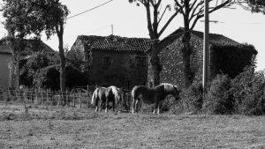 Jakobsweg Livinhac le Haut Gehöft mit Pferden Schwarz weiss