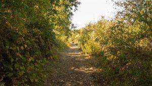 Jakobsweg Weg in der Nähe von Beduer